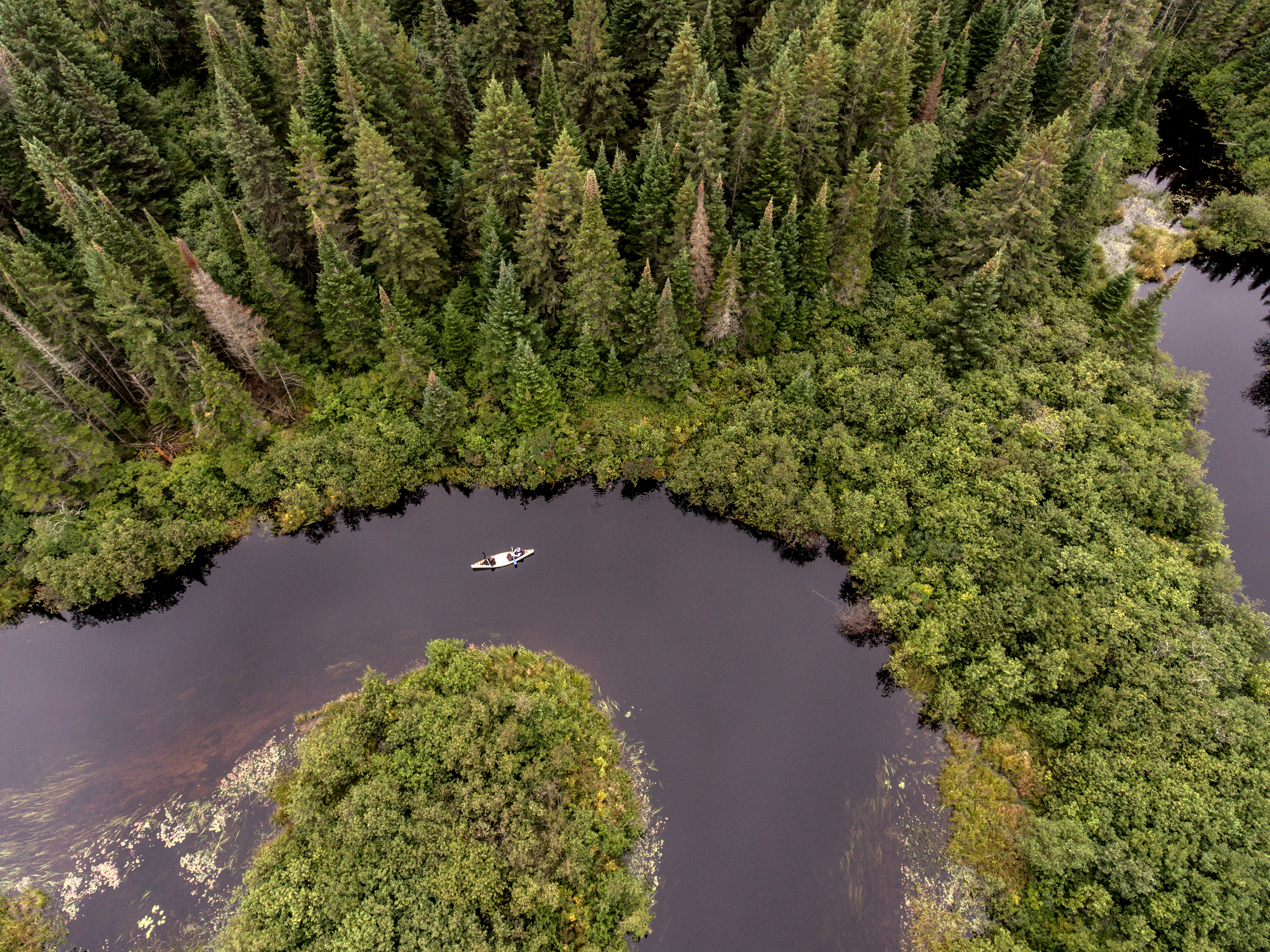 Wild Forest Canada aearial view of kayak kayaking or canoe canoeing boat on a river into a lake birds eye view veins mother nature pine tree.