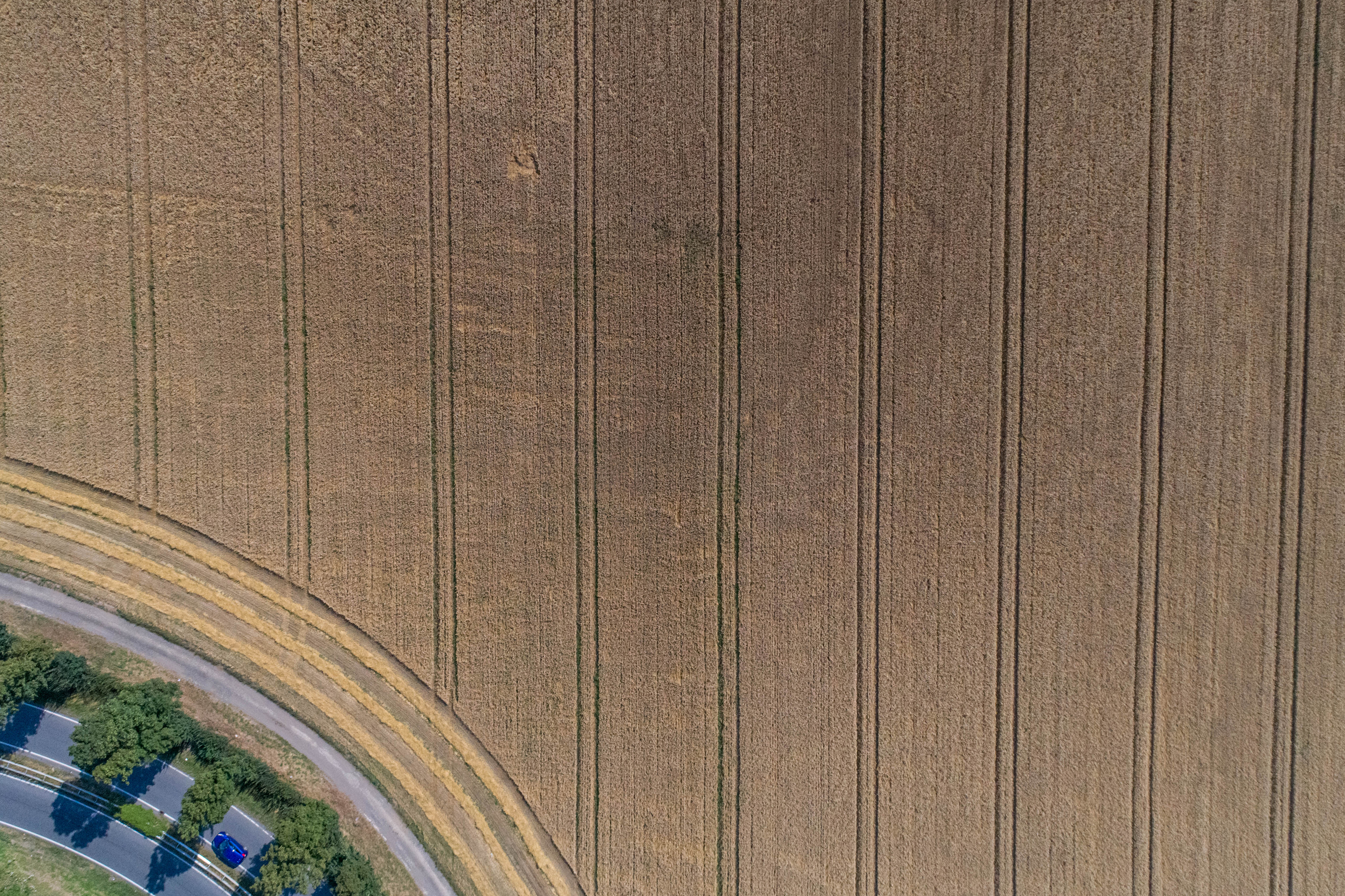 Aerial view of wheat field and tracks from tractor. Beautiful agricultural texture or background of summer agriculture landscape. Wheat farm from above.