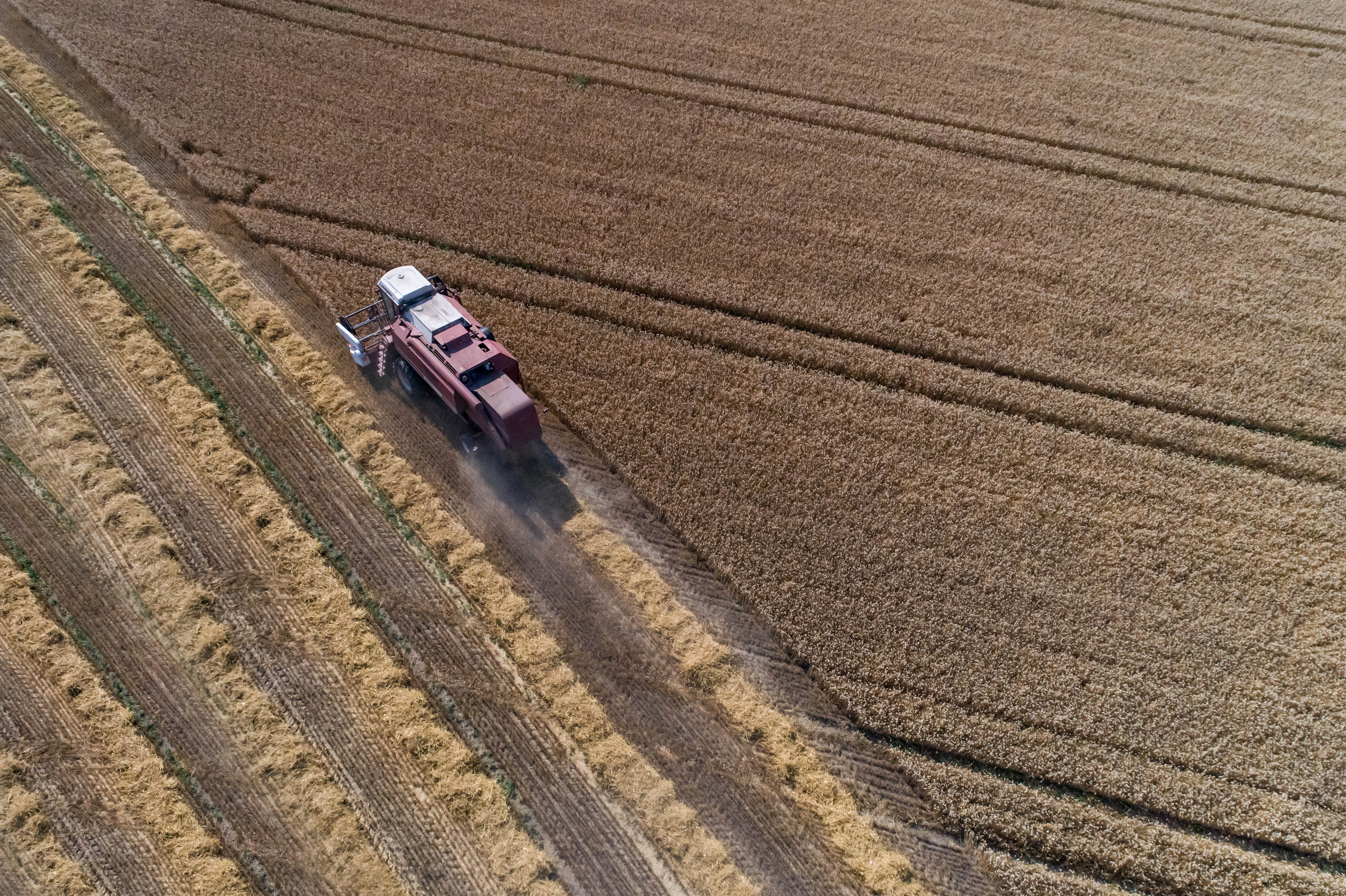 Aerial view on the combine harvester working on the large wheat field in Germany